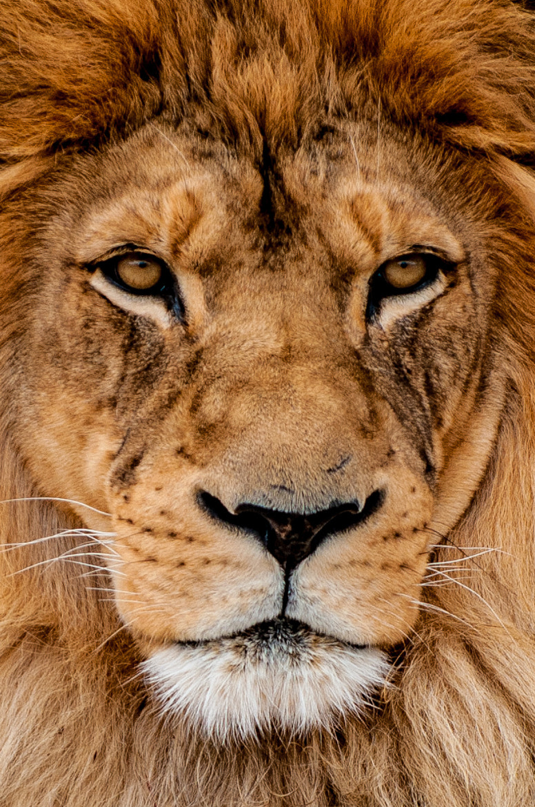 Photograph The King by Russ Colletta on 500px