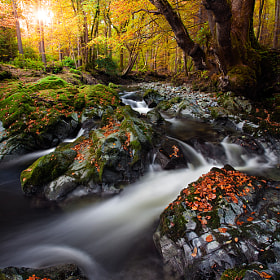 Tollymore Forest by Stephen Emerson (stephenemerson)) on 500px.com