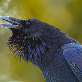 Raven's Breath by junctionbutte ) on 500px.com