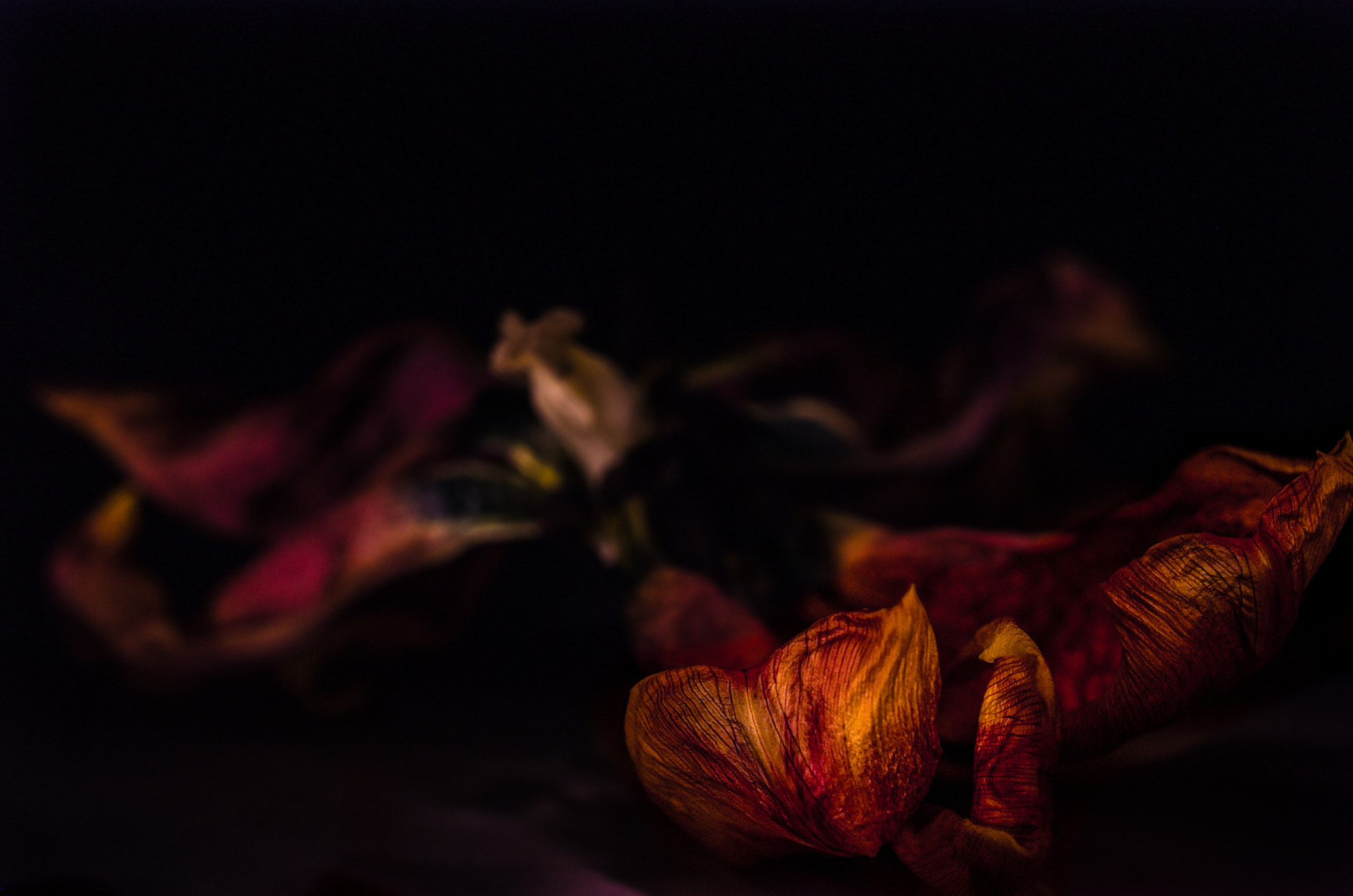 Photograph After Bloom by Kelly Anderson on 500px