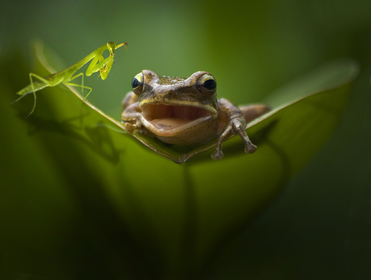 Photograph l'm sorry, my dear frog by Saelanwangsa  on 500px