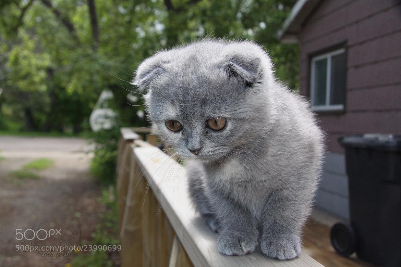 Photograph Fold Cat by Mitchell Kranz on 500px