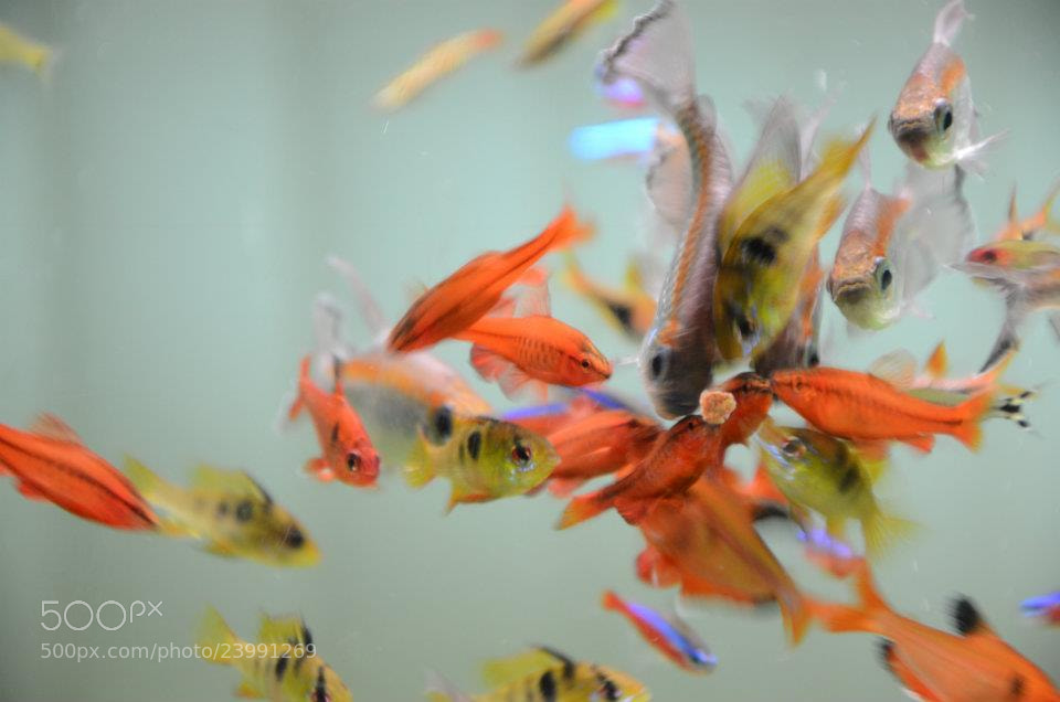 Photograph Feeding  by 敬昕 涂 on 500px