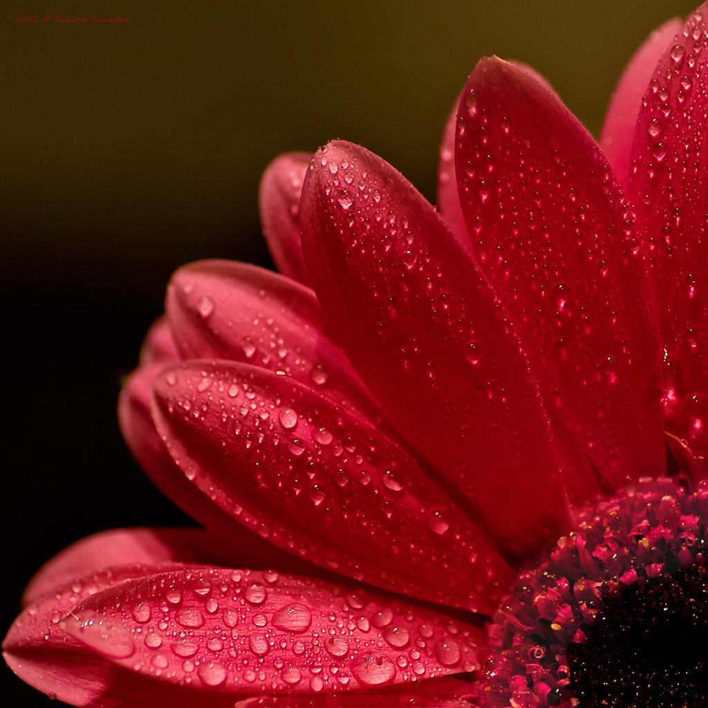 Photograph Love Drops by Roberta Silvestro on 500px
