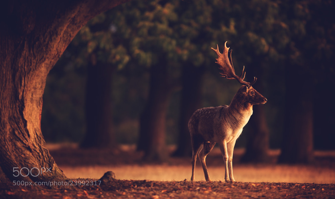Photograph split toned buck by Mark Bridger on 500px