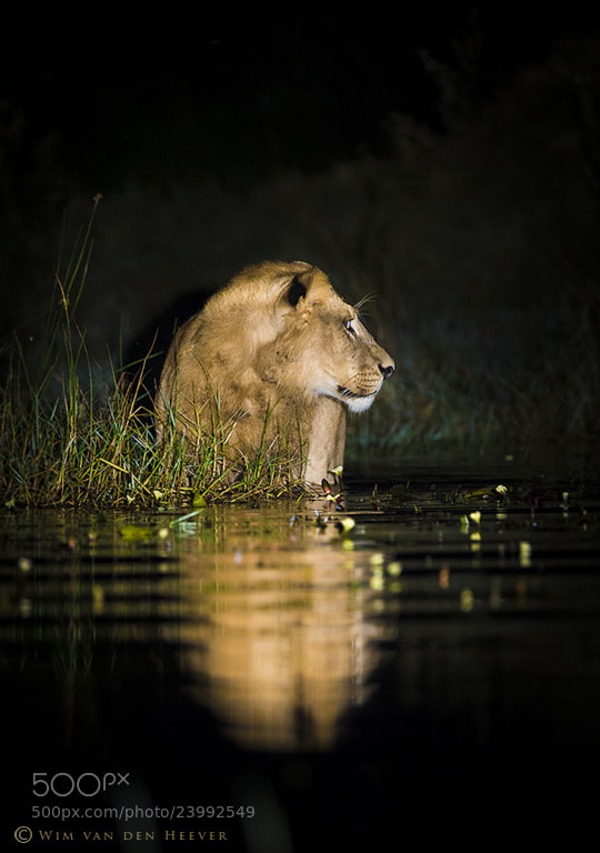 Photograph Dark and Dangerous by Wim van den Heever on 500px