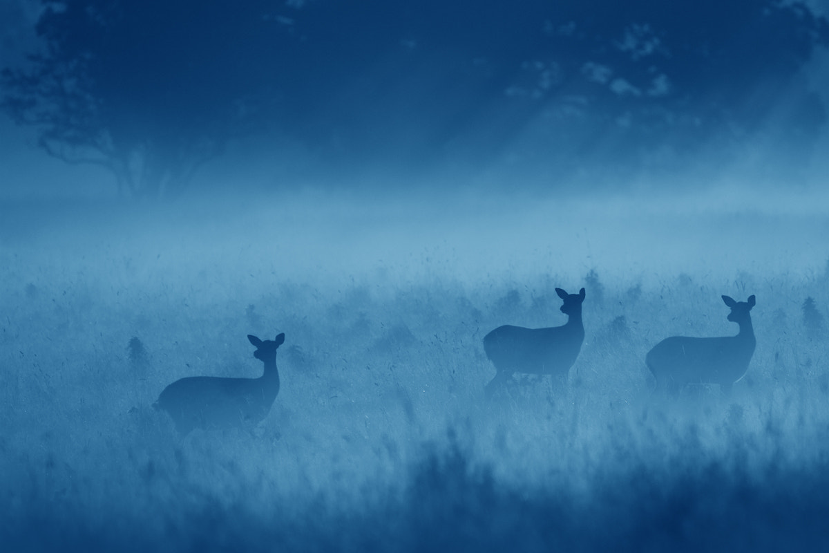 Photograph Morning Blues by Simon Roy on 500px