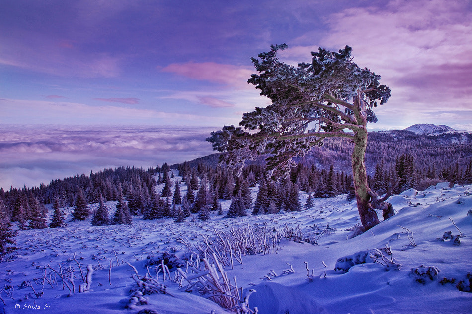 Photograph Purple magic mountain by Silvia S. on 500px