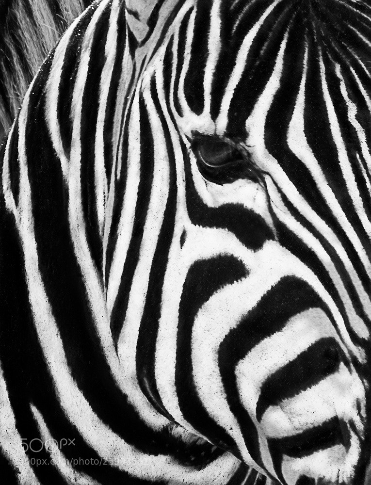 Photograph Wild patterns by Mats  Schöld on 500px