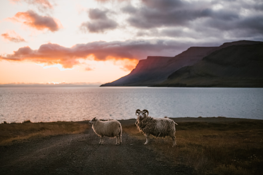 Westfjords by marina weishaupt on 500px.com