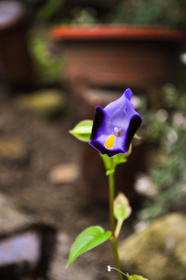 Photograph Violet by Ran Mojica on 500px
