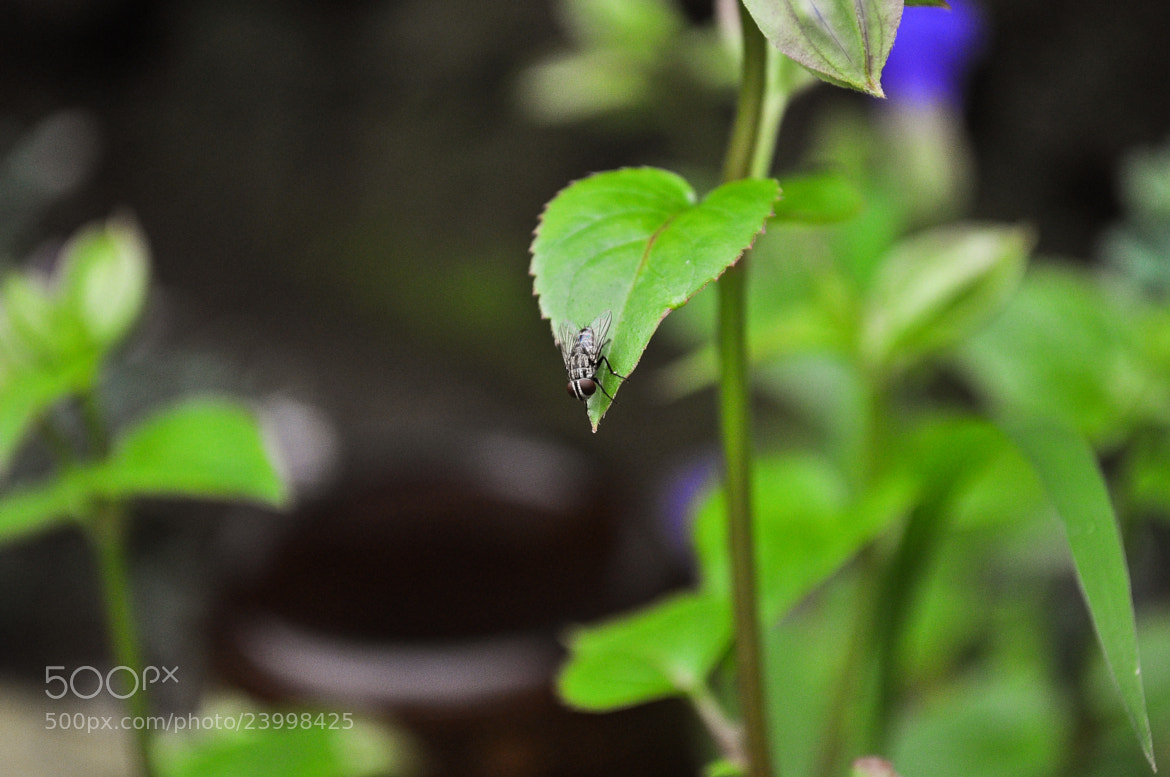 Photograph Langaw Leaf (Fly) by Ran Mojica on 500px