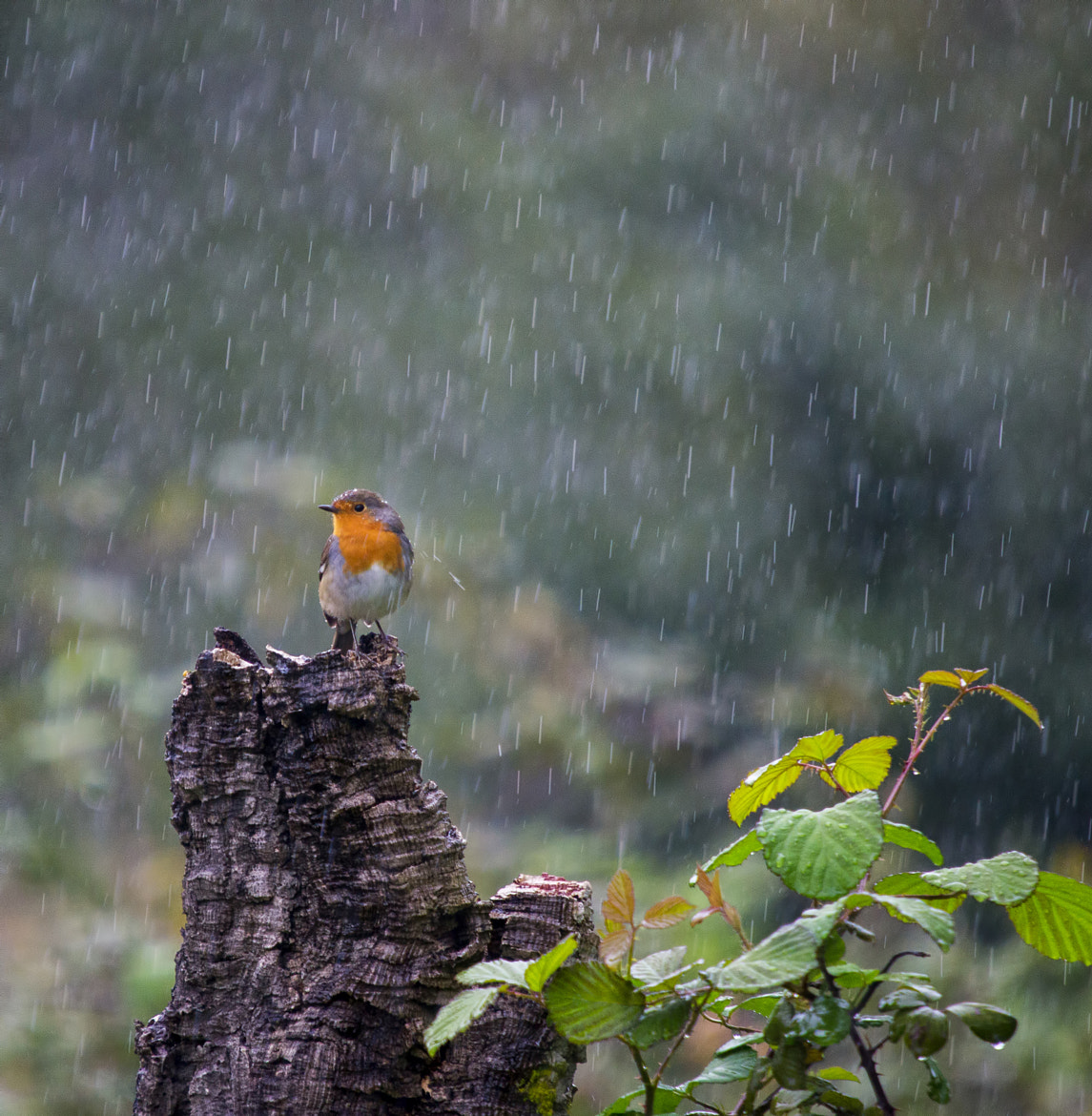 Photograph Taking shower ! by Emanuel Fernandes on 500px