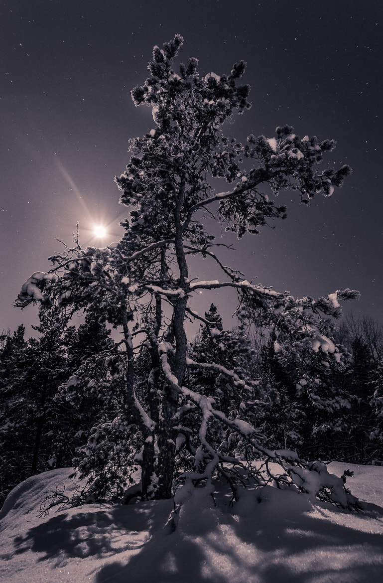 Photograph Moonlit Pine by Tapio Kaisla on 500px
