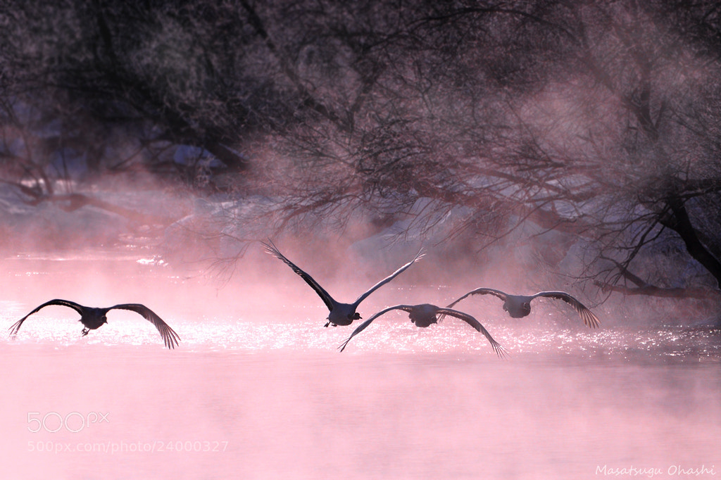 Photograph Departure by Masatsugu Ohashi on 500px