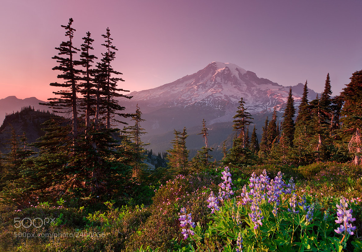 Photograph Sunset Pink, Mt. Rainier by Raffi Basmajian on 500px