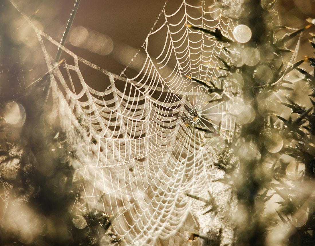 Photograph Morning Spiderweb by Gary McParland on 500px
