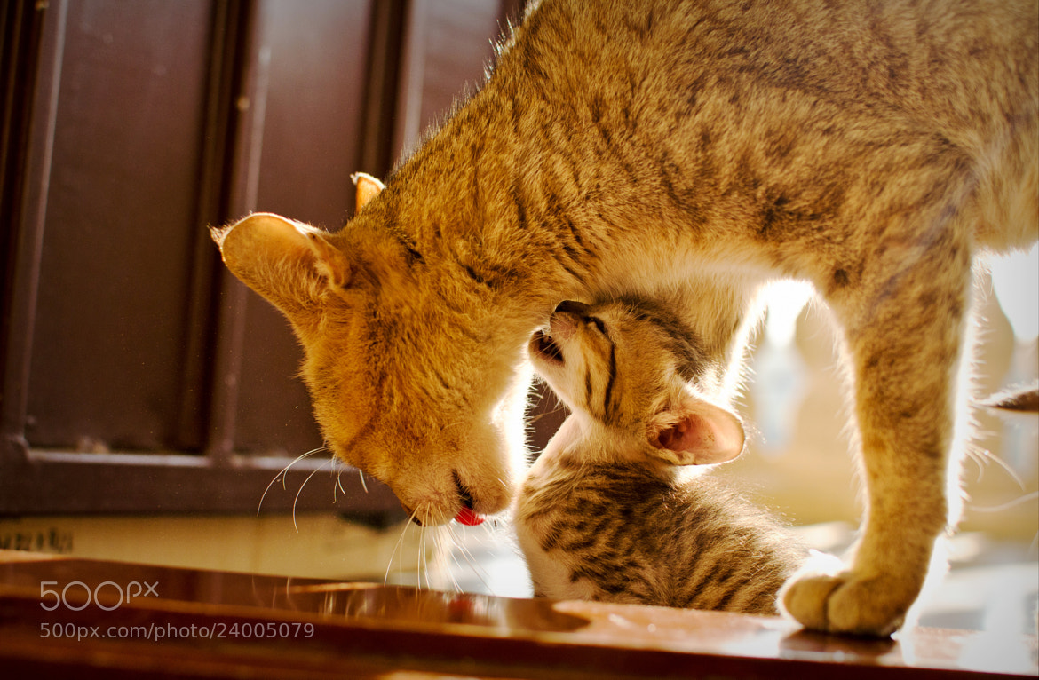 Photograph Mommy's love! by Shripathi Hadigal on 500px