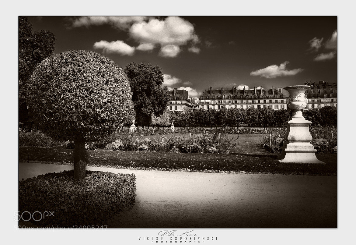 Photograph The Tuileries Garden. Paris by Viktor Korostynski on 500px