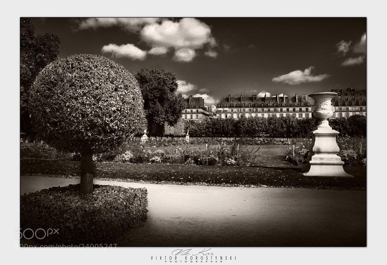 Photograph The Tuileries Garden. Paris by Viktor Korostynski on 500px
