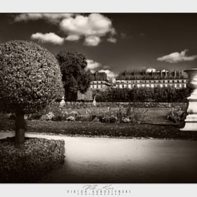 The Tuileries Garden. Paris by Viktor Korostynski (vikkor)) on 500px.com
