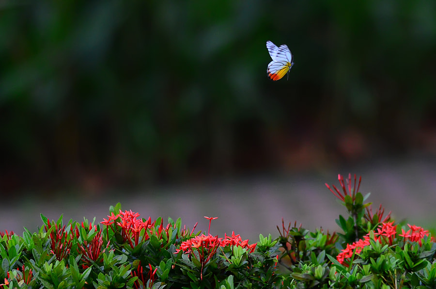 Photograph Catch me... by Khoo Boo Chuan on 500px