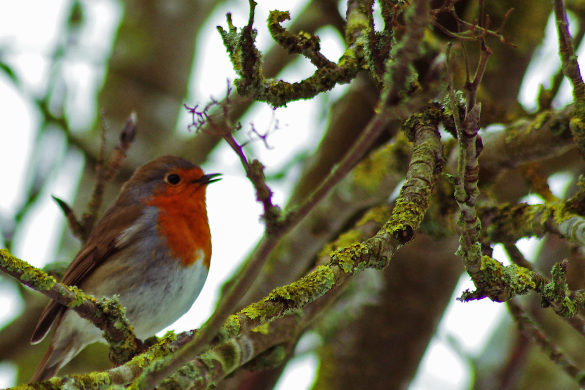 Photograph Robin In The Garden by Lee Ashman on 500px