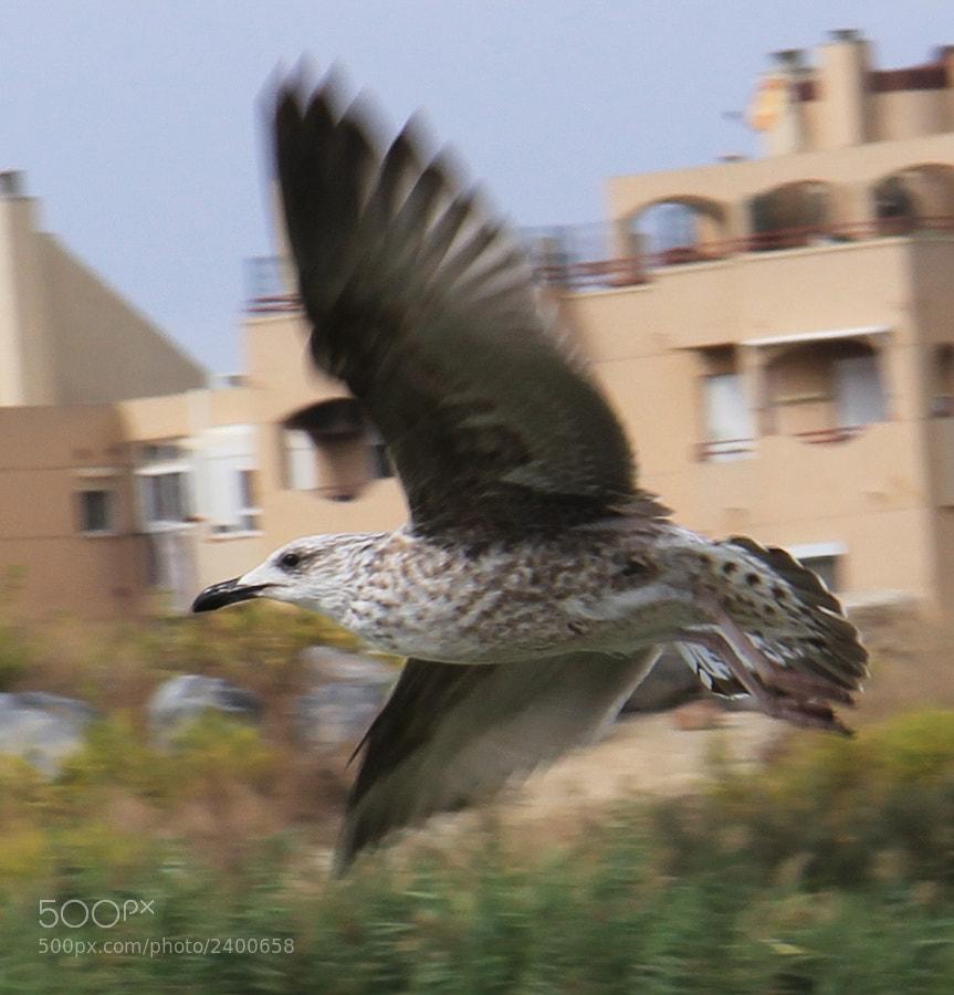 En la desembocadura del río Guadarlhorce hay, según la época, diferente tipo de aves, a pesar de la invasión  del ladrillo en sus terrenos de siempre.
