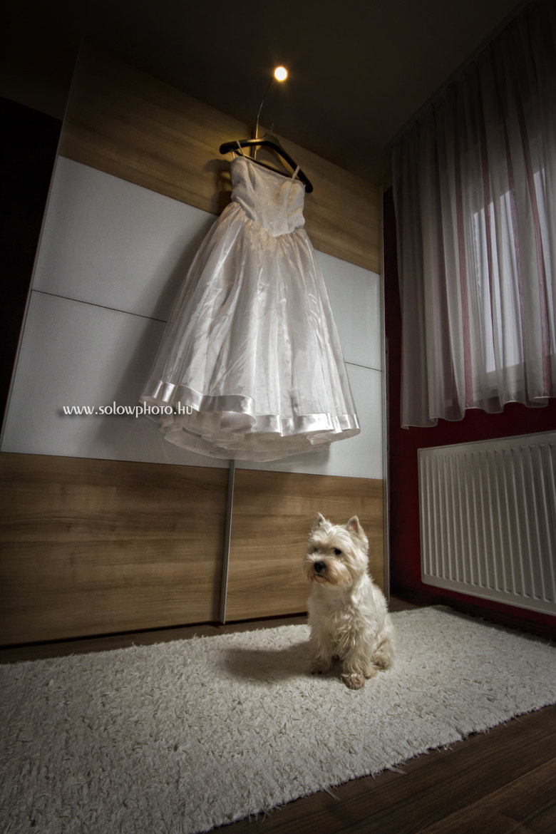 Photograph the Wedding Dress by Peter Orban on 500px