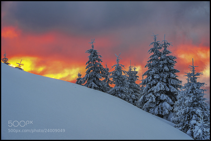 Photograph In flames by Zsolt Kiss on 500px