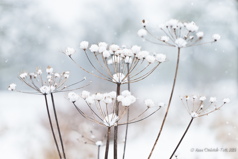 Photograph Silently Pale by Anna Omiotek-Tott on 500px