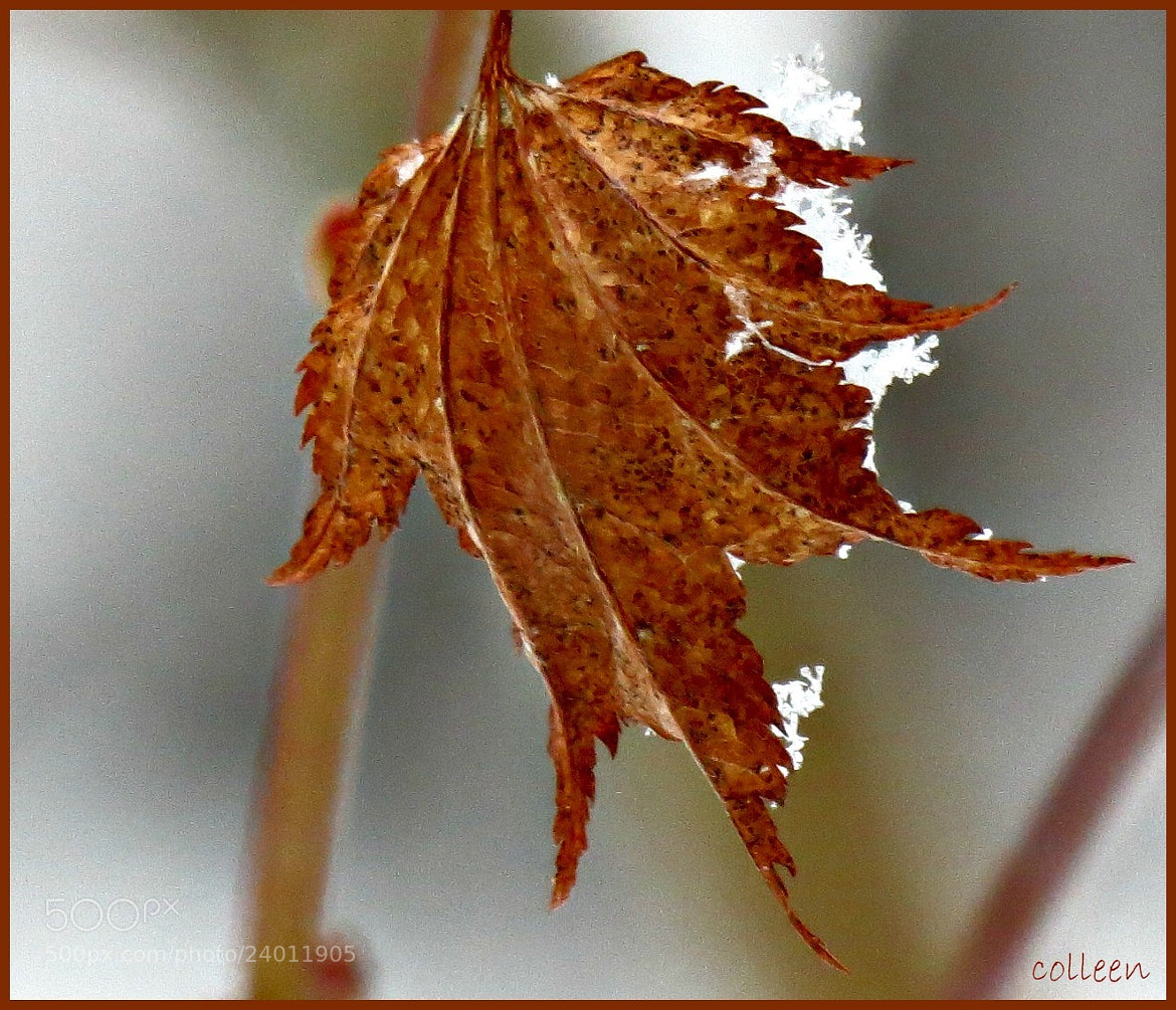 Photograph Nature's Lace! by colleen thurgood on 500px