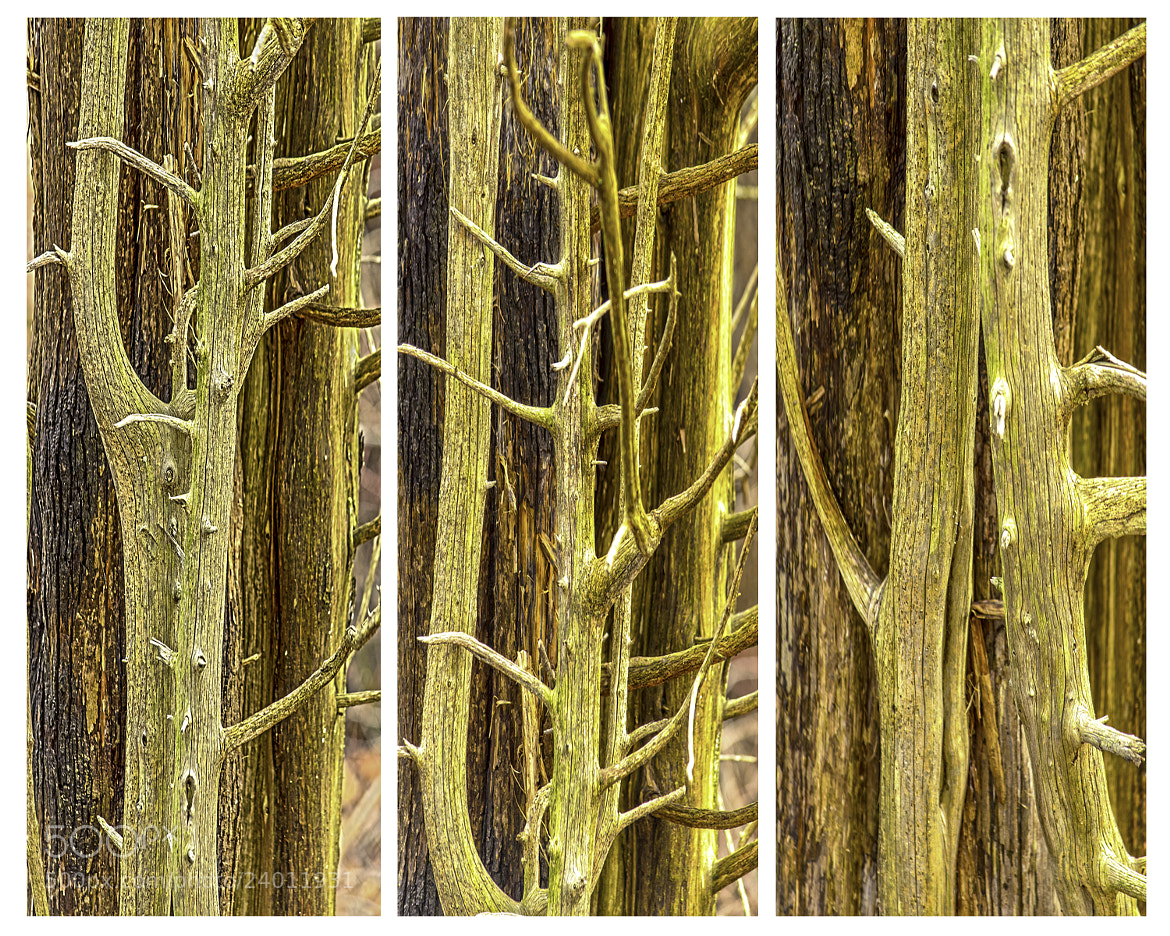 Photograph Wood Abstracts by Jim Molloy on 500px