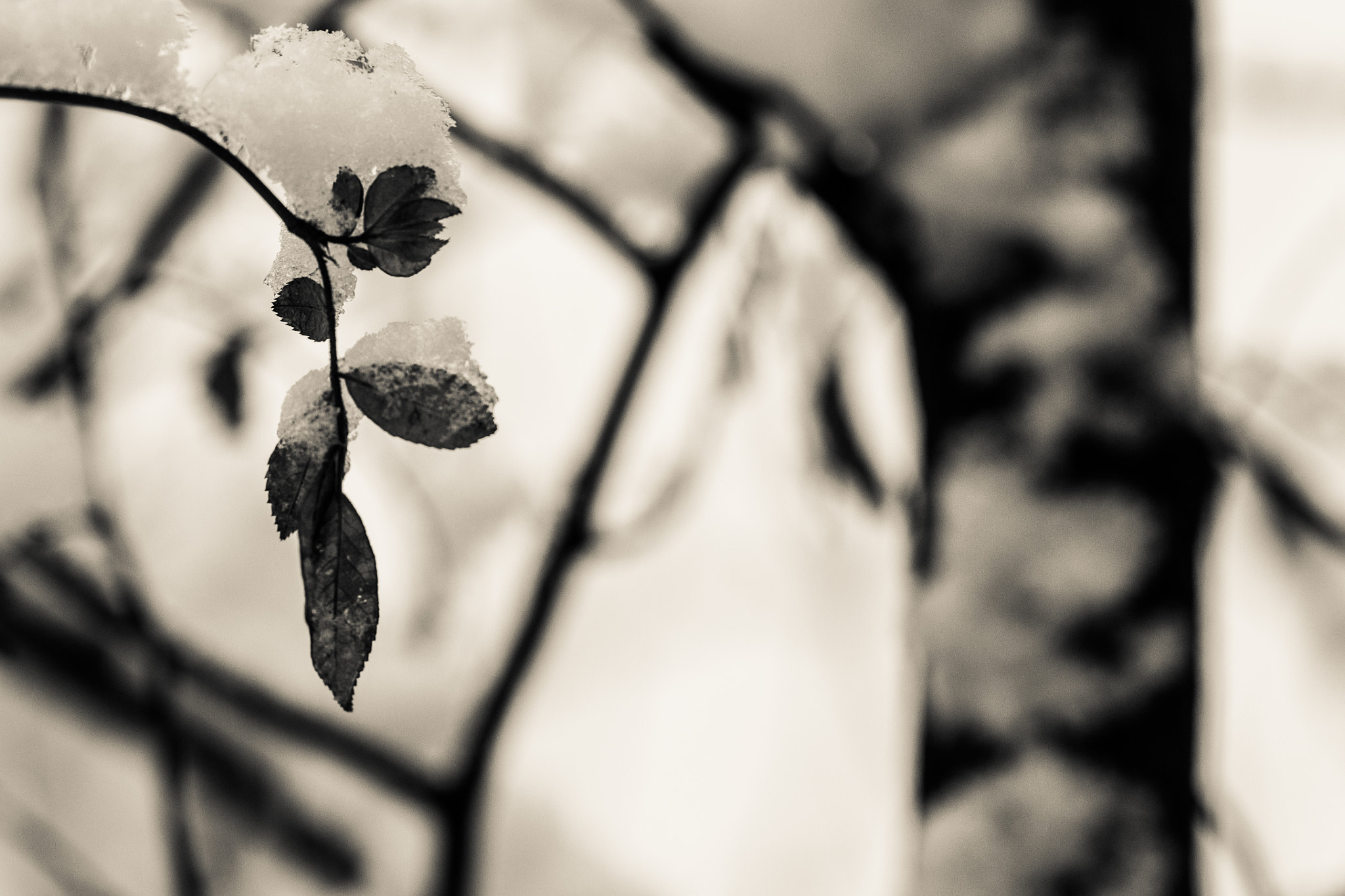 Photograph leaves and snow by Andreas Levi on 500px