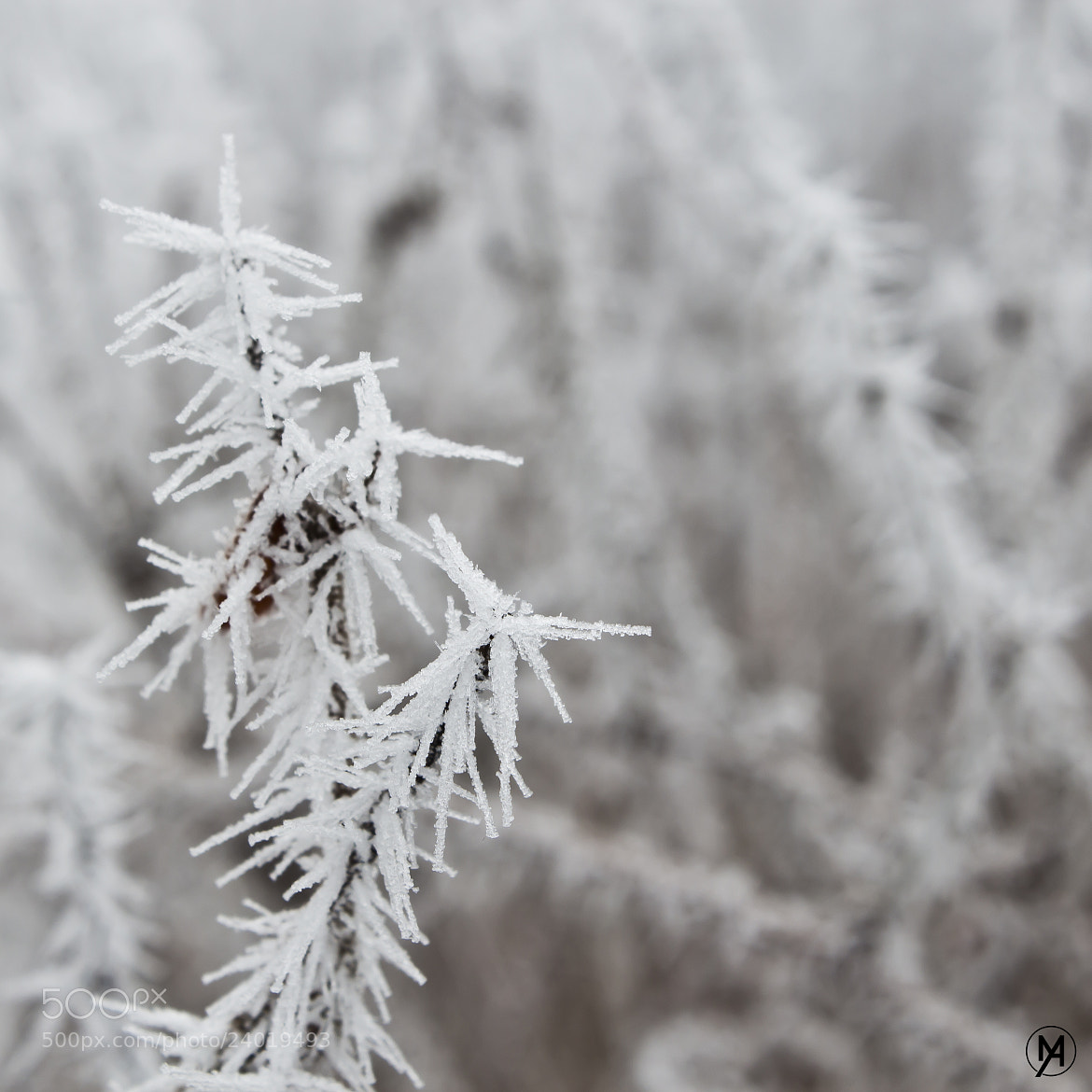 Photograph Frost by Martin S on 500px