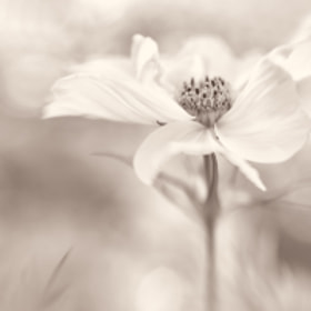 Petal Dance by Penny Myles (PennyMyles)) on 500px.com