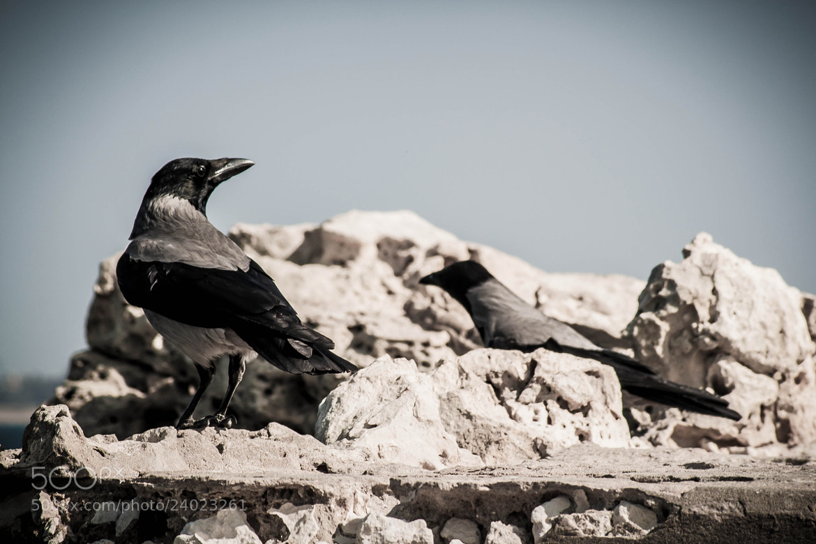 Photograph Angery Birds by Mohamed Hegazi on 500px
