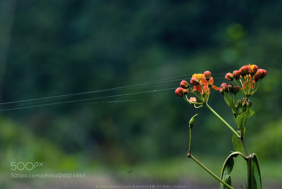 Photograph Strings Attached by Romie Stanley .D.Guns on 500px