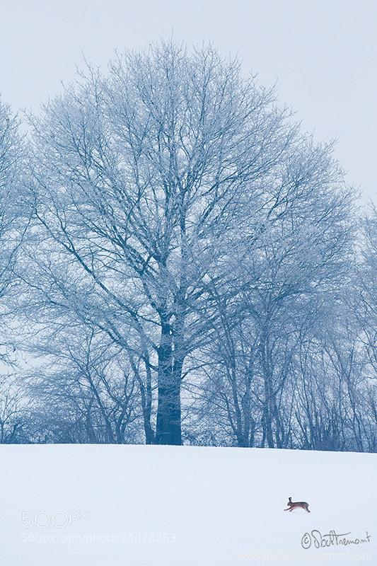Photograph L'arbre et le lièvre by Michel d'Oultremont on 500px
