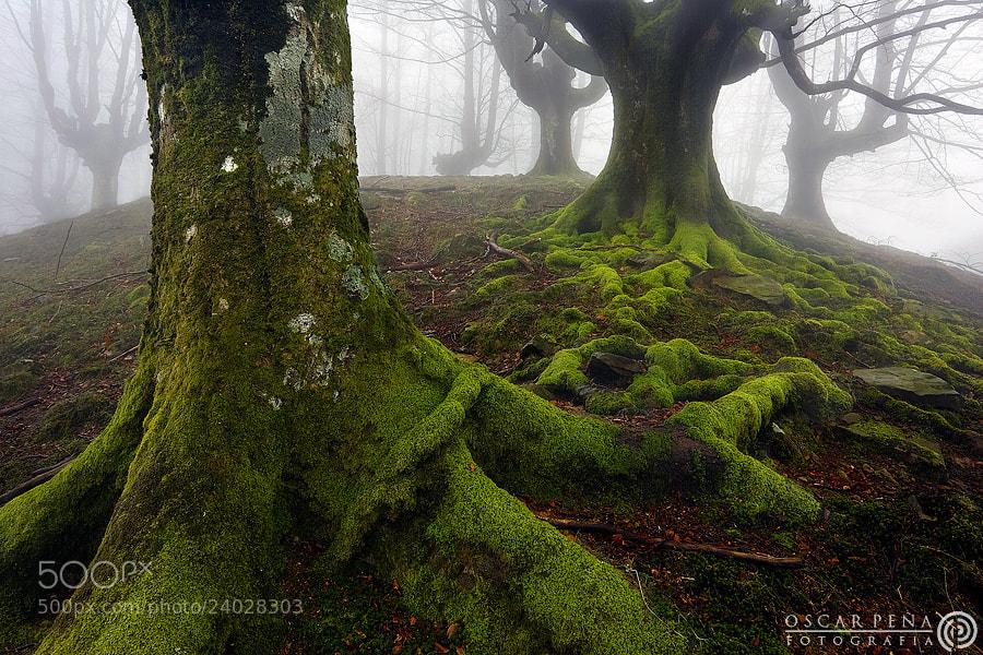 Photograph - Planet tree - by Oscar  Peña on 500px