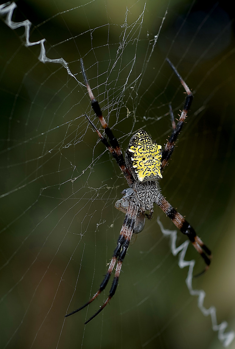 Photograph Spider in the wild by JC PAGE on 500px
