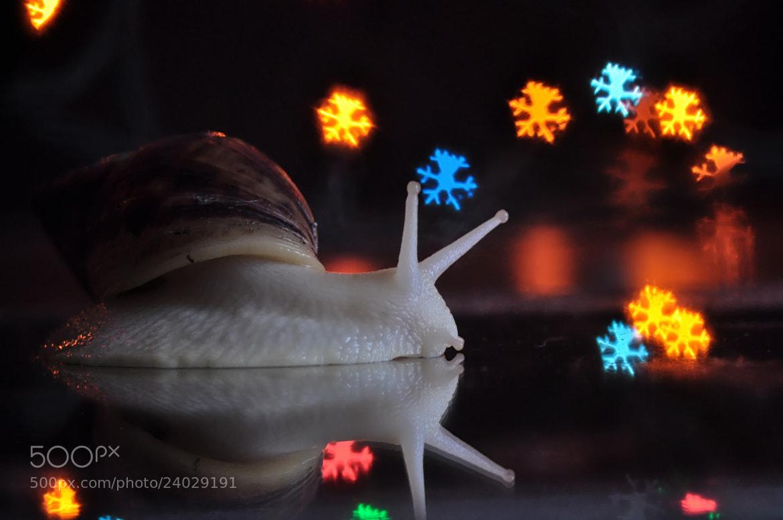 Photograph Magic snail by Irina Ivanova on 500px