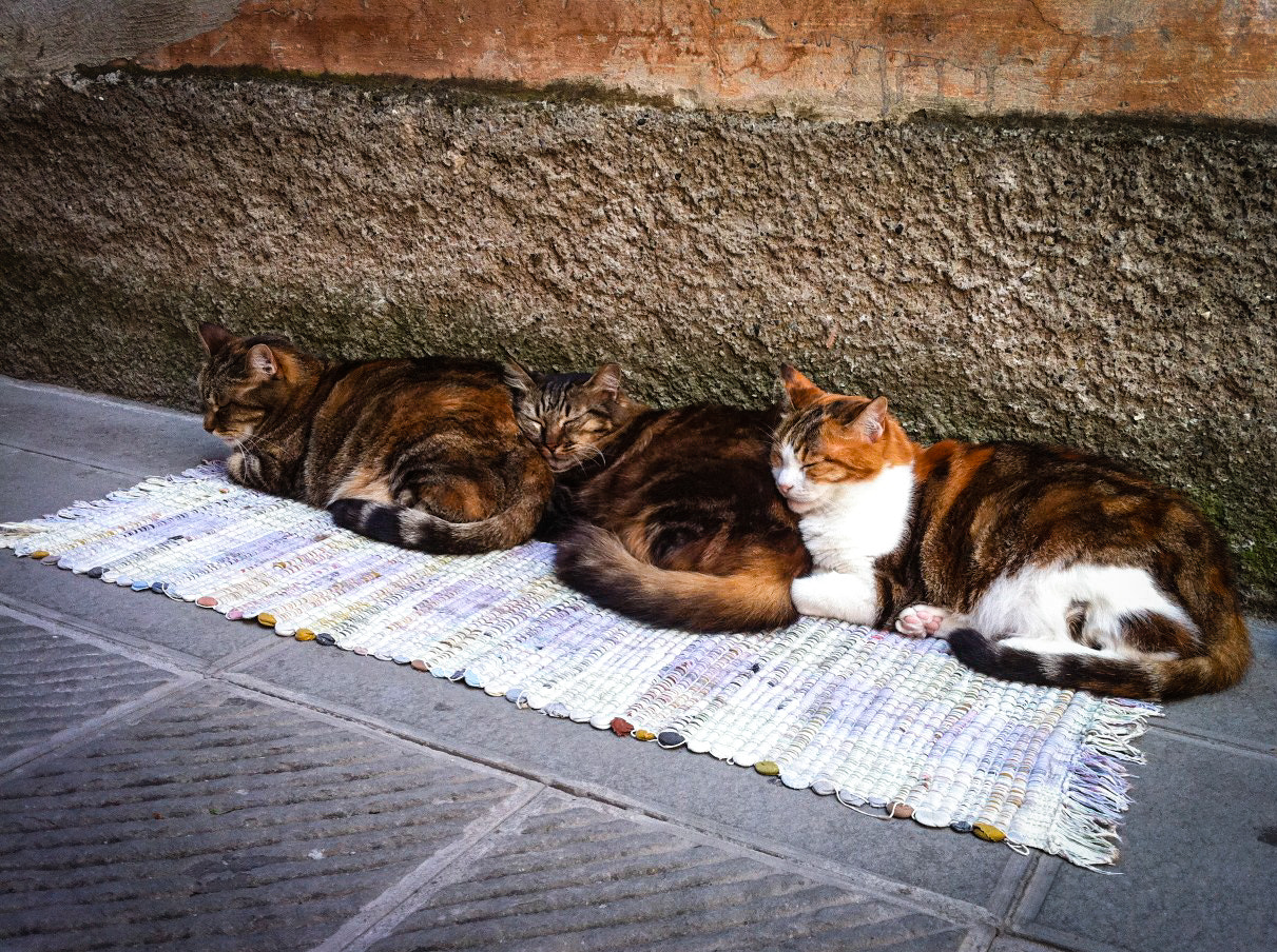 Photograph three blind cats by David Doughty on 500px