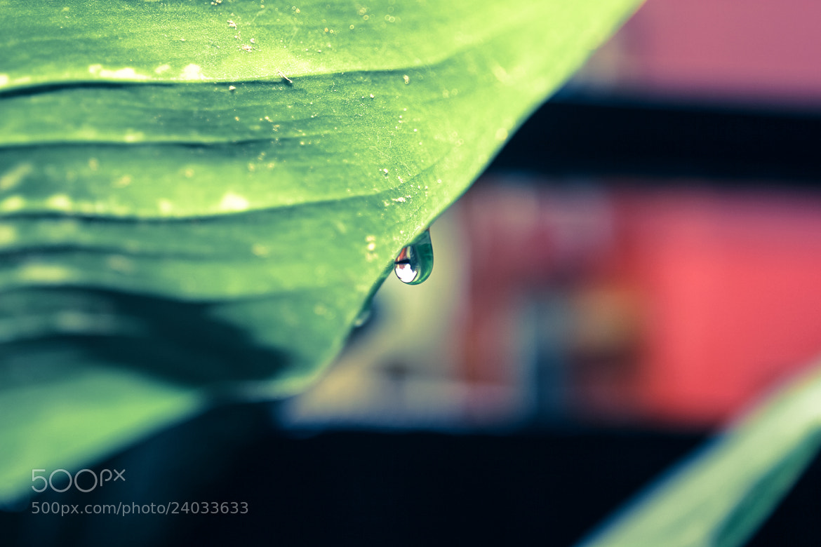 Photograph Drop of life. by Sartaj Singh on 500px