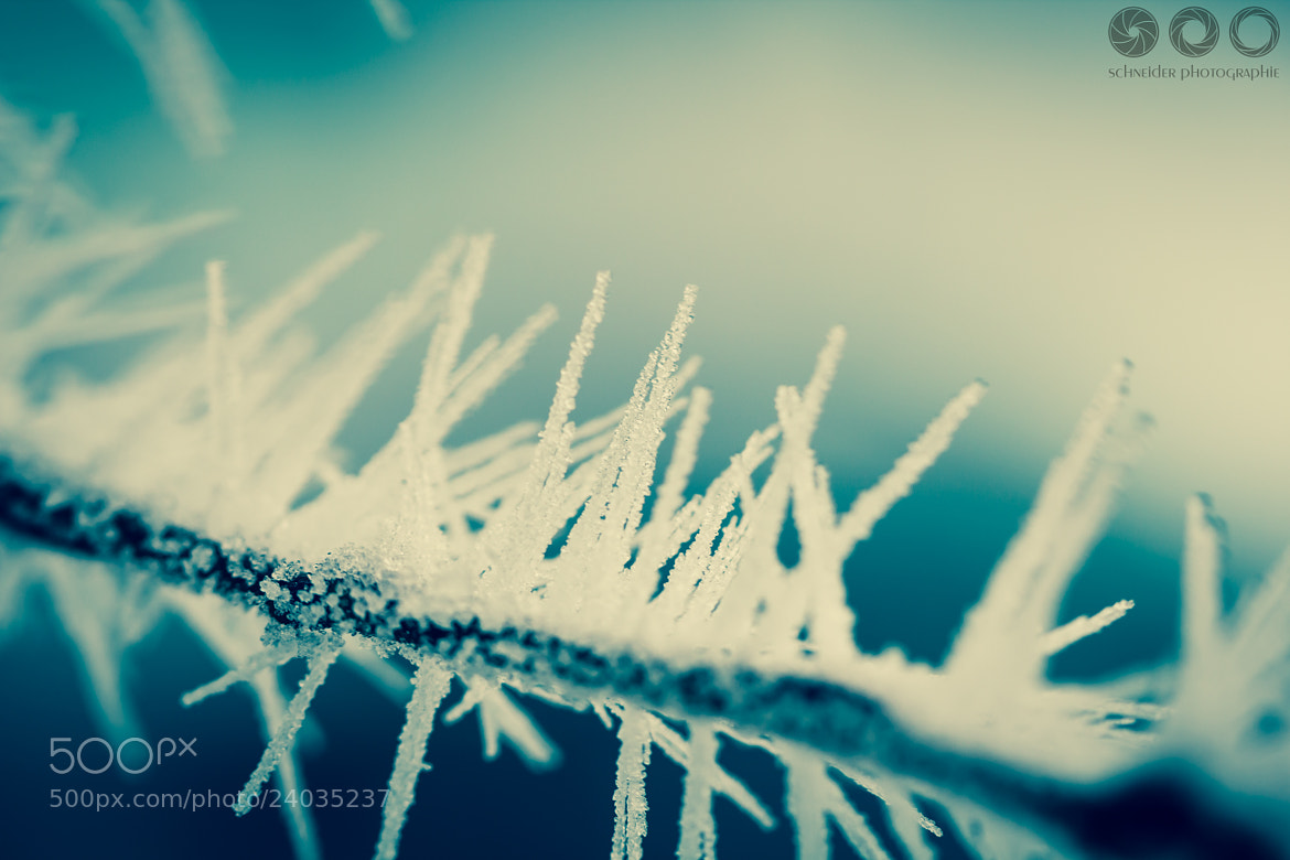 Photograph Prickles by Christoph Schneider on 500px