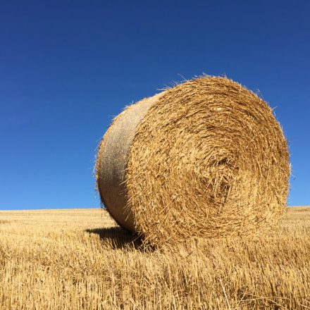 Bale of Hay in Field in front of Blue Sky