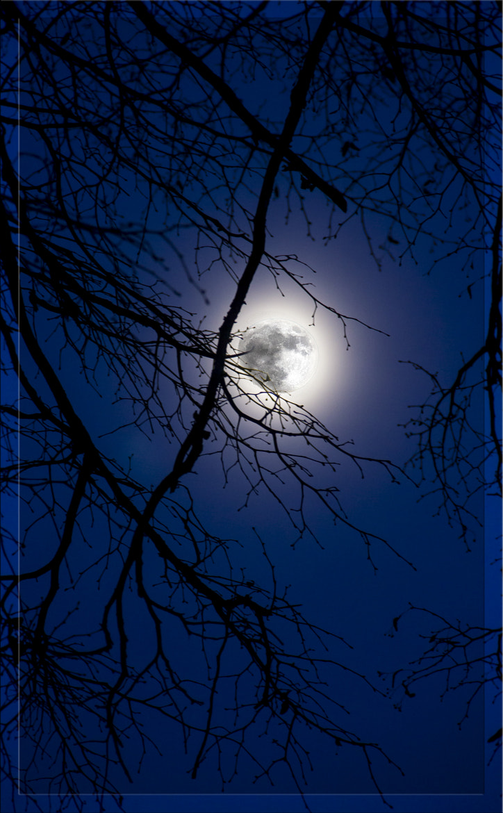 Photograph Moonlight by Martin Peintner on 500px
