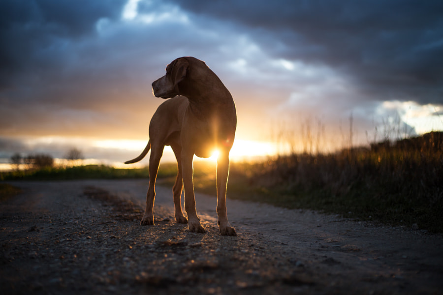 Winter Sun by Christoph Eberl