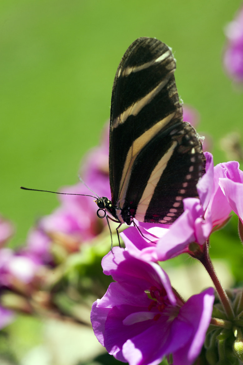 Photograph Butterfly and flower by Cristobal Garciaferro Rubio on 500px
