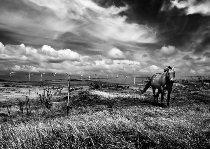 Photograph South Point Horse by Andrew Walsh Photography on 500px